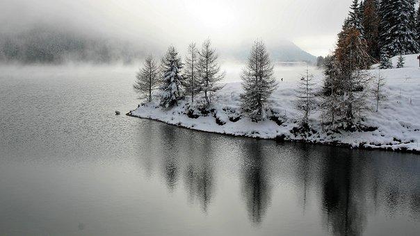 Larch, Winter, Landscape, Snow, Tree, Davos, View