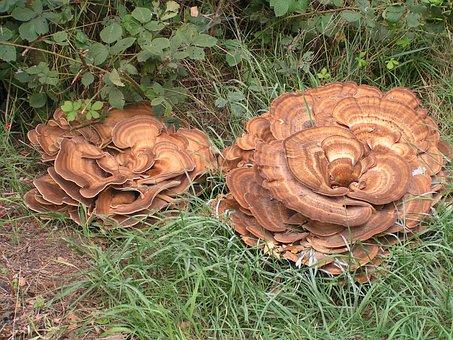 Mushrooms, Autumn, Netherlands