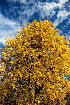 Tree, Nature, Autumn, The Sky, Yellow, Blue, Colors