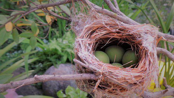Bird Nest, New Real, Nature, The New House