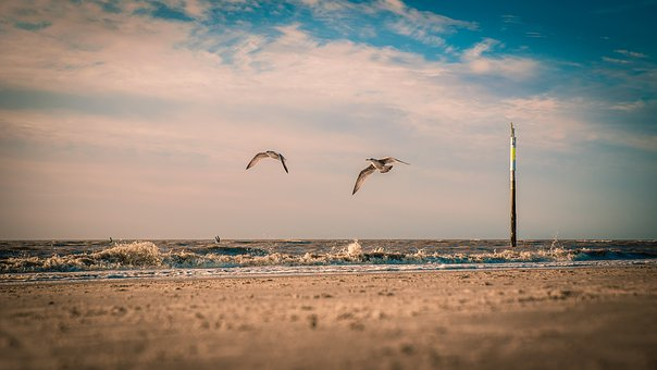 Seagull, Beach, North Sea, Coast, Fishing, Dune, Water