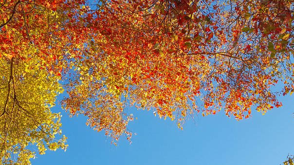 Fall, Leaves, Sky, Autumn, Fall Leaves, Season, Orange