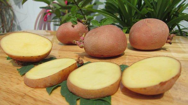 Science West, Potato, Potatoes