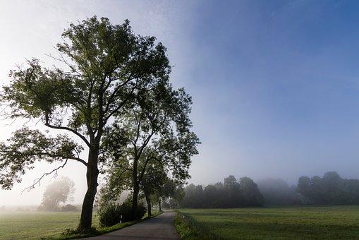 Nature, Fog, Autumn, Road, Landscape, Forest