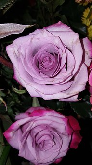 Purple, Rose, Pink