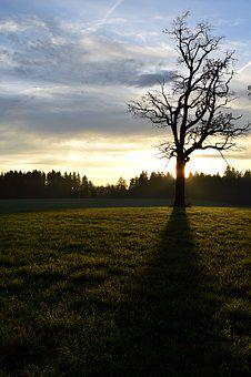 Tree, Kahl, Back Light, Shadow, Nature, Grass, Sky