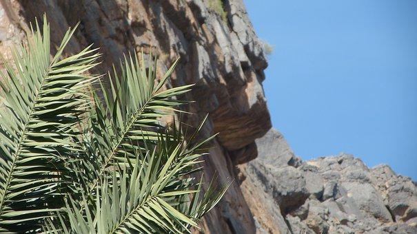 Palm, Mountain, Slope, Oman