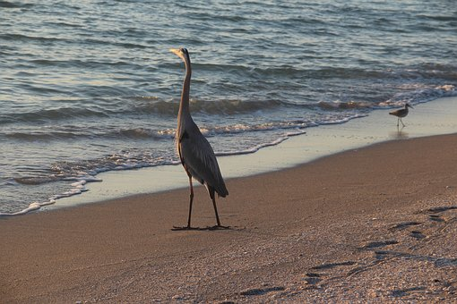 Beach, Sunset, Bird, Water, Sea, Outdoor, Wildlife