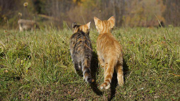 Cat, Young Cats, Young Animal, Young Cat, Domestic Cat