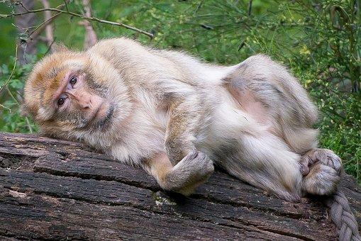Monkey, Sad, Caught, Zoo, Primate, Imprisoned