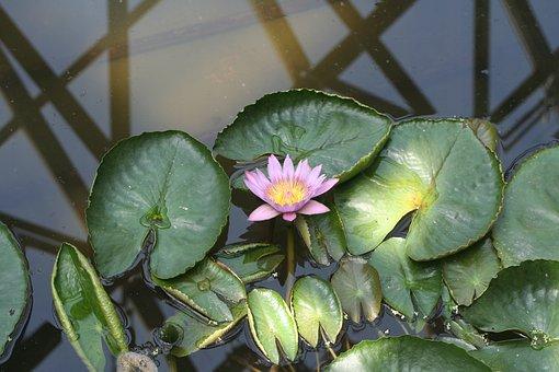 Jeju Island, Lotus, Arboretum