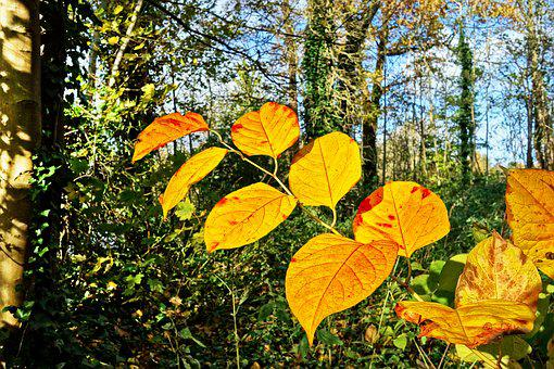 Leaves, Branch, Tree, Autumn Leaves, Forest, Autumn