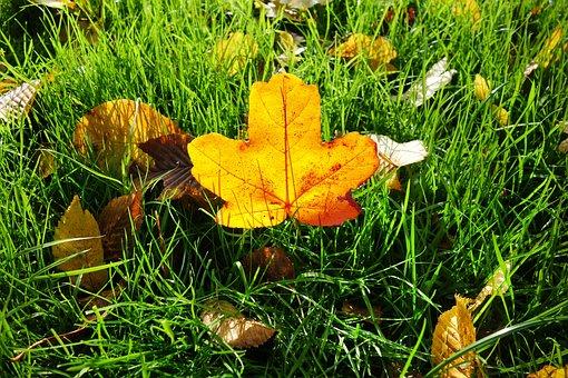 Leaf, Autumn Leaf, Grass, Fallen Leaf, Autumn Colors