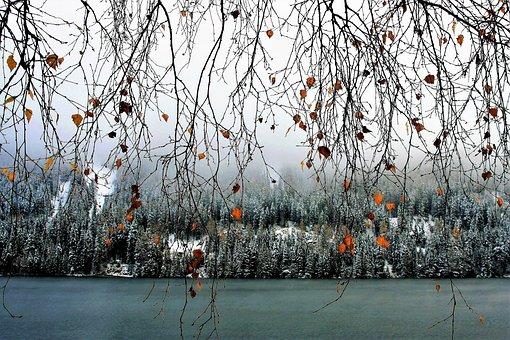 Twigs, Hanging, Delicate, Birch, Yellow, Foliage, Beach