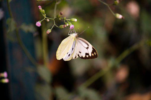 Butterfly, Nature, Beauty, Natural Beauty, Colourful