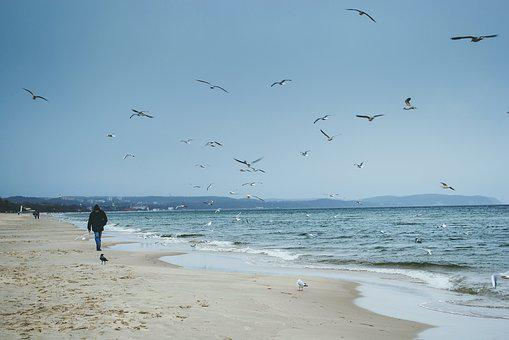 Nature, Baltic Sea, Beach, Birds, Blue, Fly, Flying