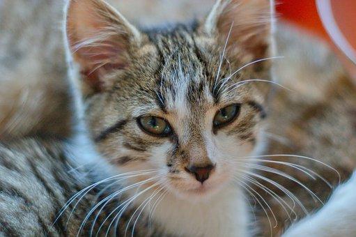 Cat, Sweet, Young Cat, Cute, Animals, Pet, Domestic Cat