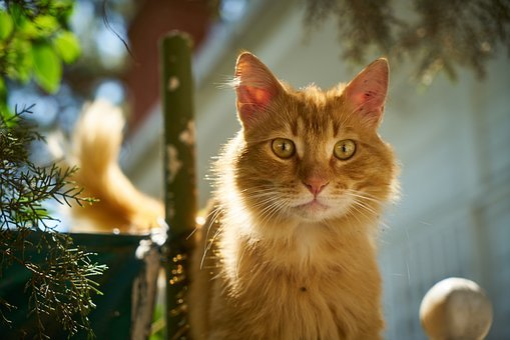 Cat, Yellow, Cute, Nature, Animal, Eye, Street, Little