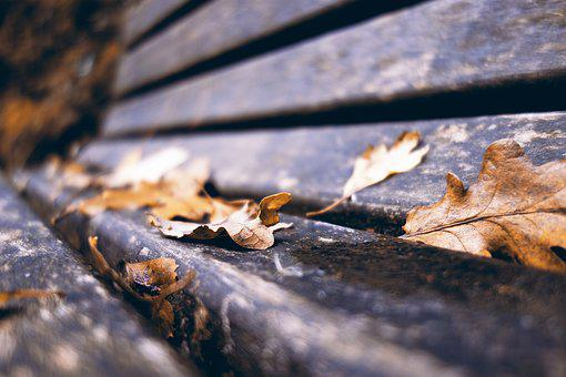 Bench, Wooden Bench, Park Bench, Fall Leaves, Autumn