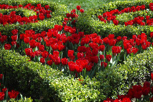 Flower, Red, Green, Botanical, Flower Picture, Spring