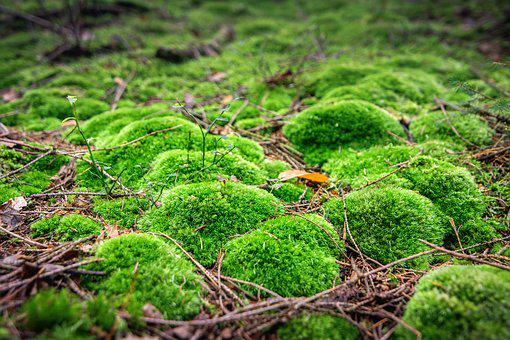 Moss, Forest, Green, Nature, Public Record, Fluffy