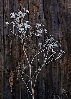 Frost, Old Barn Wood, Wood, Winter, Barn, Cold, Snow