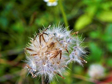 Flower, Green, Natural, Floral, Plant, Spring, Nature
