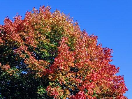 Tree, Autumn, Golden Autumn, Fall Color, Mood, Leaves