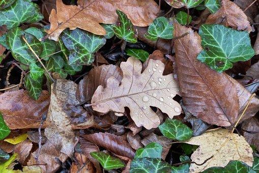 Leaves, Fall Foliage