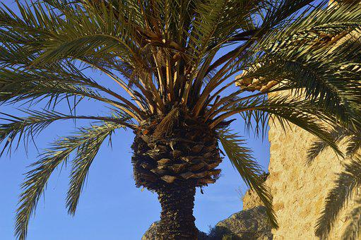 Palm Tree, Leaves Of Palm Tree, Plant, Leaves, Green