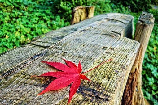 Log Bench, Bench, Leaf, Autumn Leaf, Autumn Colors