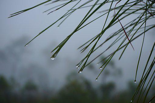 Water Drops, Wet, Fog, Morning, Water, Liquid, Macro