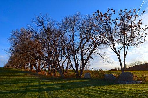 Trees, Field, Morning, Light, Sky, Nature, Landscape