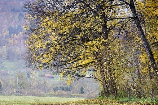 Rain, Autumn, Wet, Drip, Nature, Drop Of Water, Forest