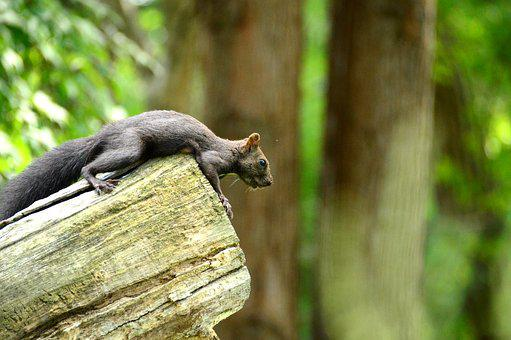 Nature, Squirrel, Animal, Rodents