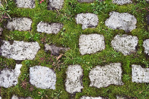 Pavers, Pavement, Moss, Green, Old, Overgrown, Walkway