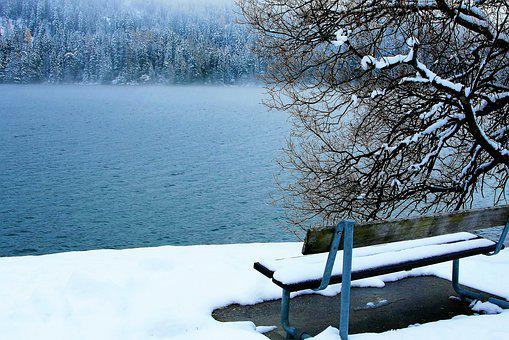 Bench, Snow, White, The Fog, In The Winter, Lake, Pine