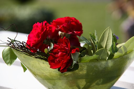 Nature, Flower, Rose, Red