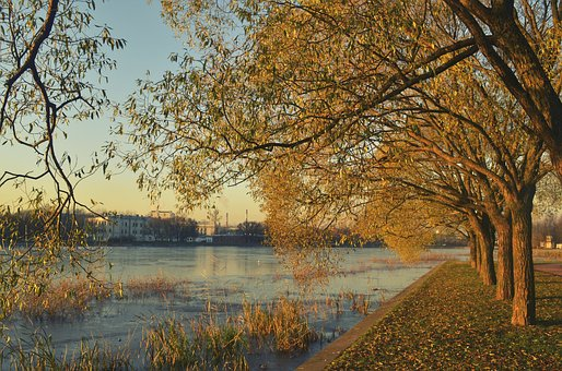 Autumn, River, Trees, Landscape, Nature, Quiet River
