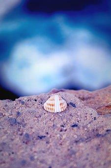 Shell, Sea, Water, Blue, Sand, Stone, Macro, Nature