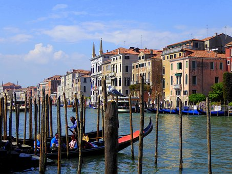Venice, Canal Grande, Seagull, Gondolas, Rialto, Italy
