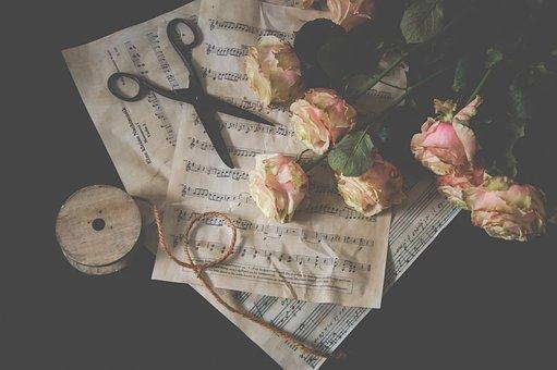 Scissors, Roses, Still Life, Pink Flower, Rose Petals