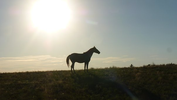 Horse, Silhouetted, Sunset, Sun Disk, Outdoors, Animals