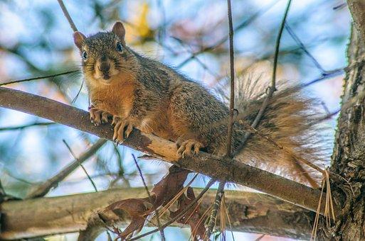 Squirrel, Tree, Animal, Nature, Forest, Wildlife, Cute