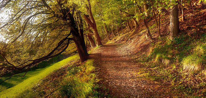 Away, Autumn, Golden Autumn, Nature, Landscape