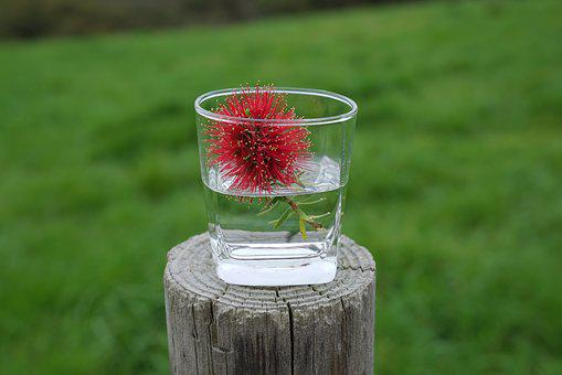 Bottle Brush Flowers, In A Cup, Informal, Decorative