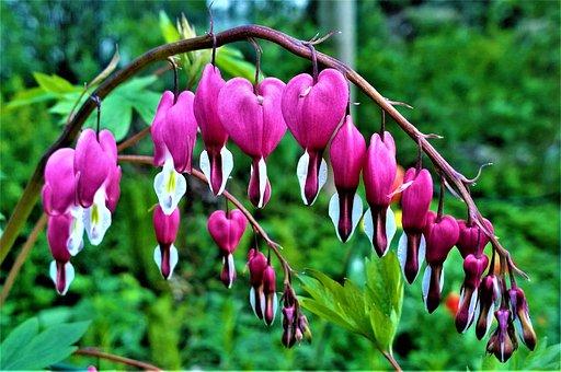 Flowers, Heart, Love, Garden, Romantic, Flower