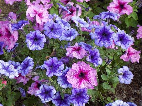 Flowers, Beautiful Flowers, Pink, Purple