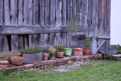 Yard, Garden, Potted Plants, Plants, Green, Grass Plant