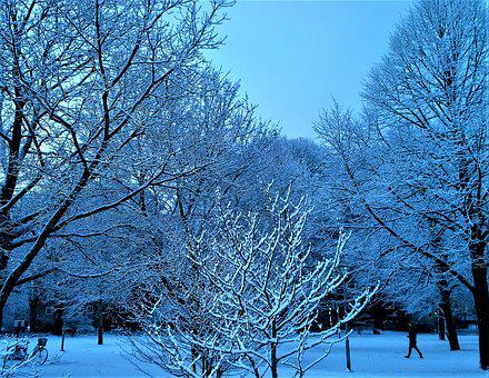 Winter, Snow, Tree, Landscapes, Snow Landscape